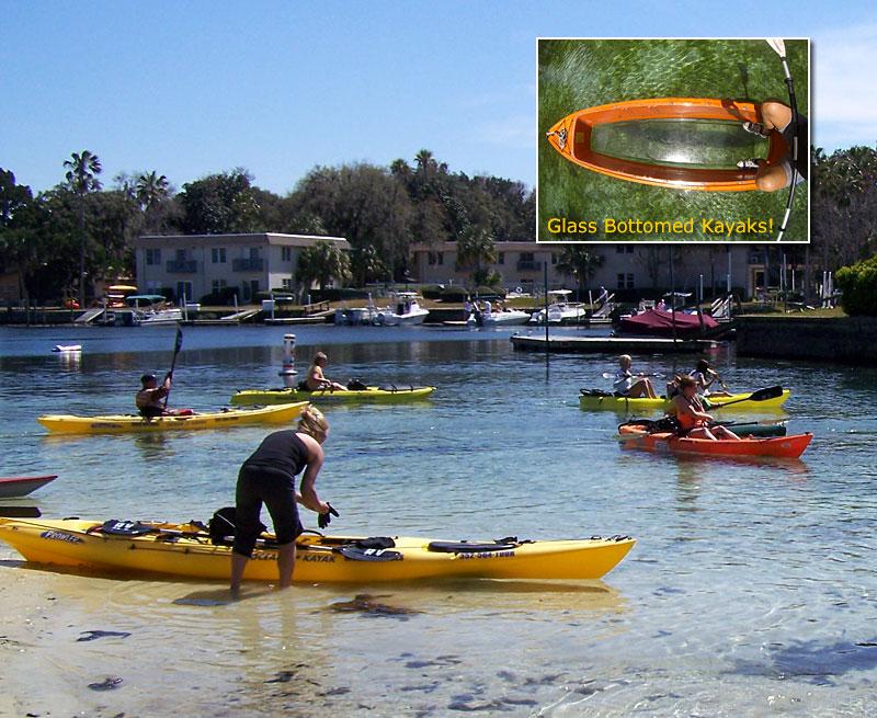 Crystal River Pontoon Boat Tours
