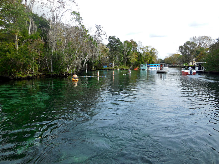 The Crystal River is one of the Most Beautiful Natural Waterways in Florid