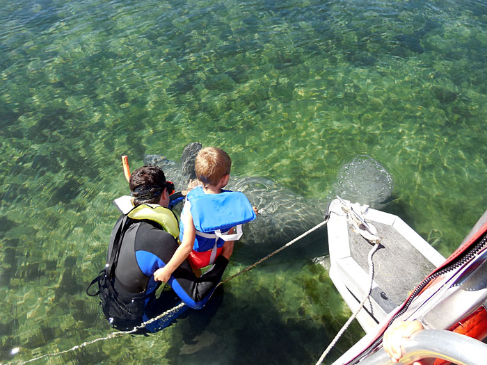 Your Entire Family Will Enjoy Swimming with the Manatees in Crystal River Florida
