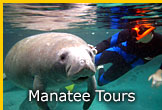 Florida Manatee Tours