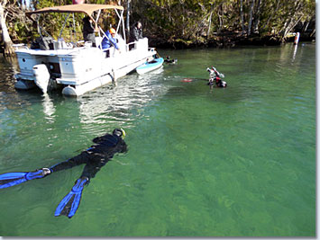 Snorkeling with Manatees in Crystal River Florida