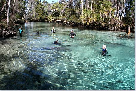 Crystal River Florida Area Information